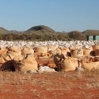 Large quantities of bulk samples from the Nolans Bore rare-earth deposit, Northern Territory, Australia.